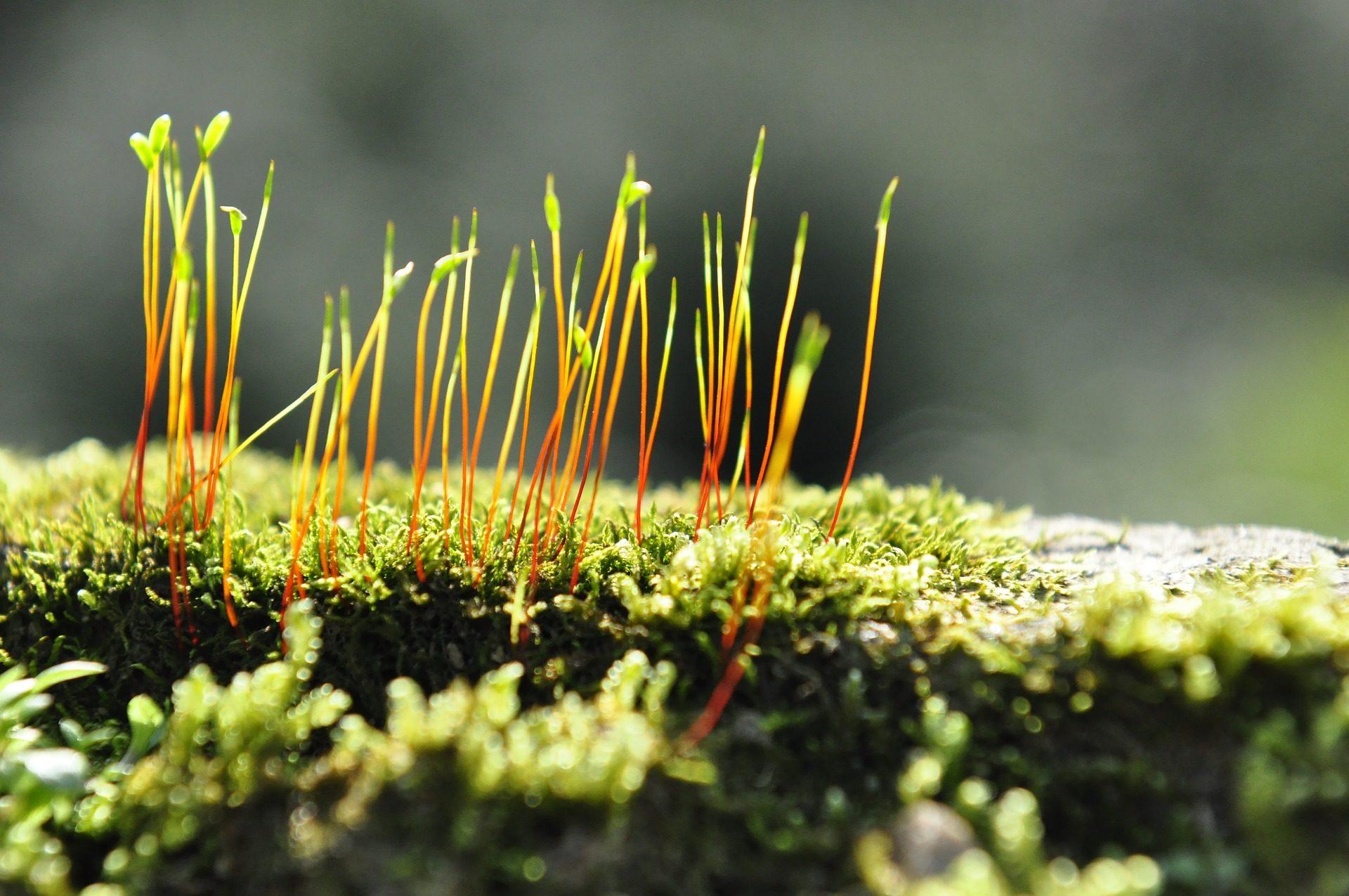 musgo, semillas, brotes, crecimiento, vida - Fondos de Pantalla HD - professor-falken.com