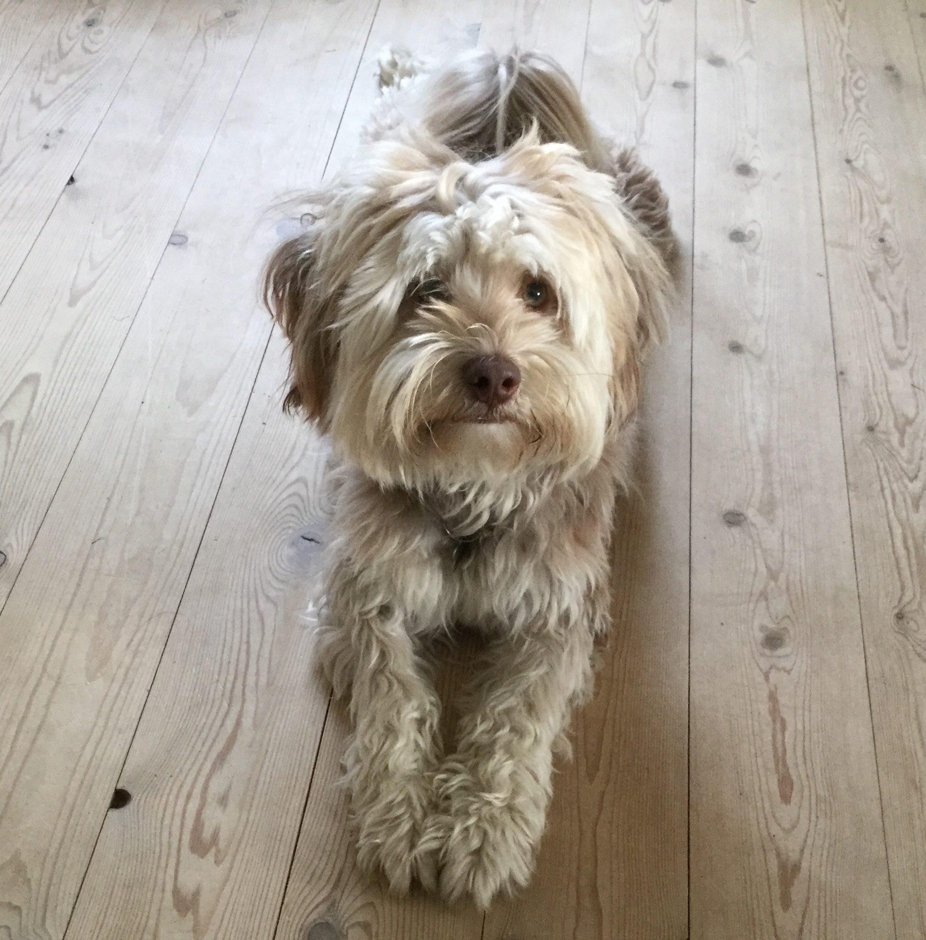σκύλος, Κατοικίδιο ζώο, Σύντροφος, Κοίτα, γούνα, χώμα, ξύλο - Wallpapers HD - Professor-falken.com