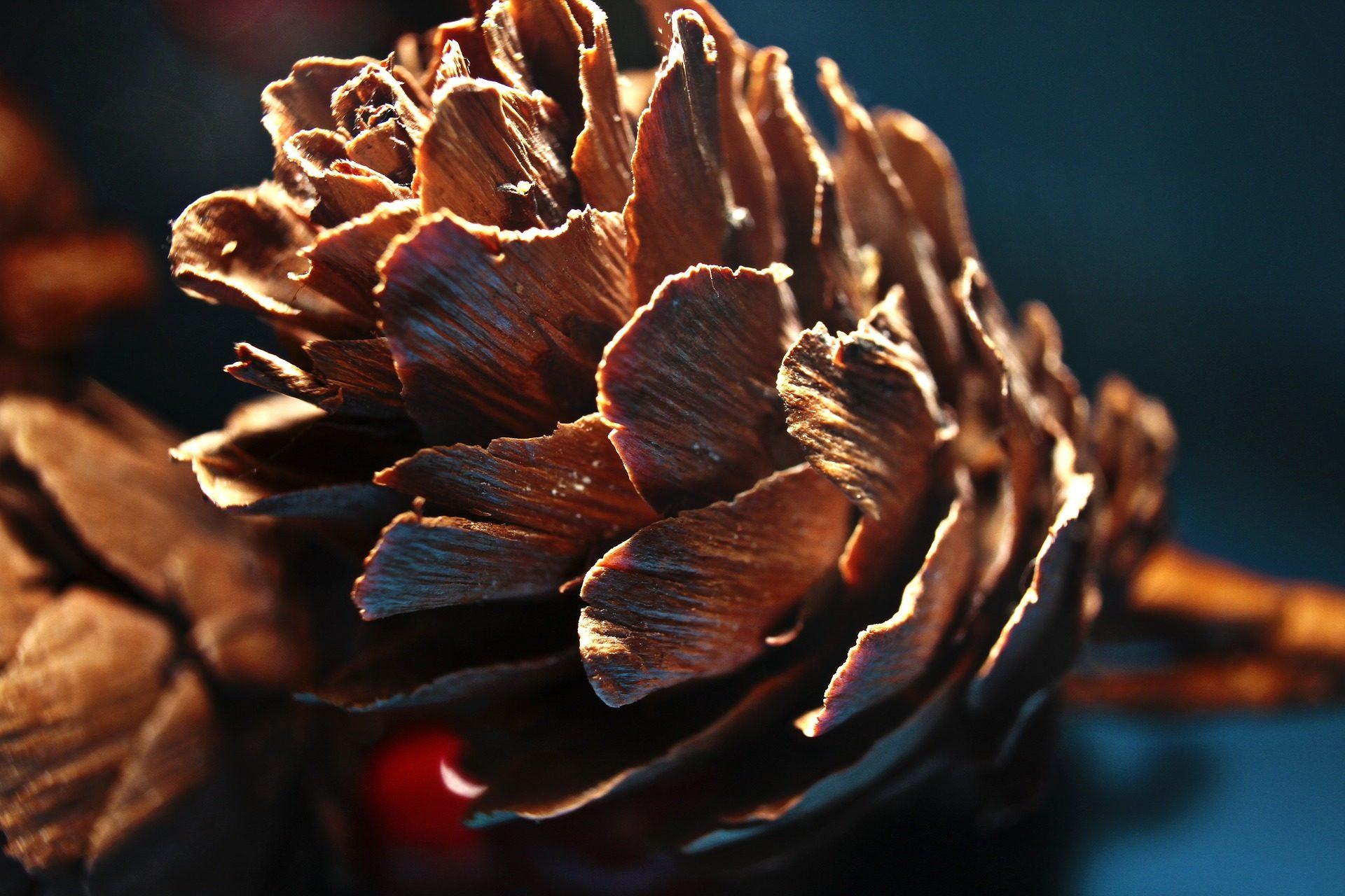 パイナップル, 松, フルーツ, シェル, 針葉樹 - HD の壁紙 - 教授-falken.com
