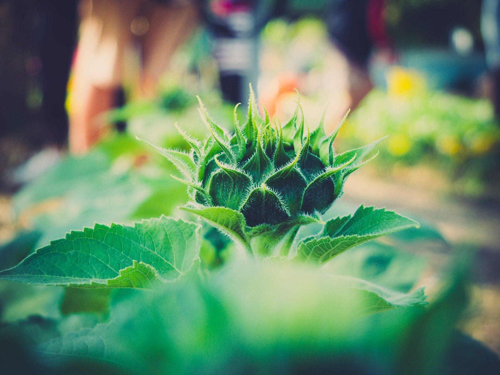 piano terra, fiore, scoppio, foglie, spine, Verde - Sfondi HD - Professor-falken.com