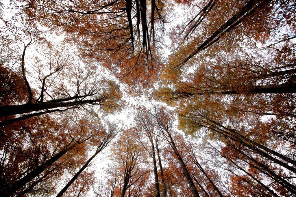 木, カップ, 葉, 枝, 空, 1703290821