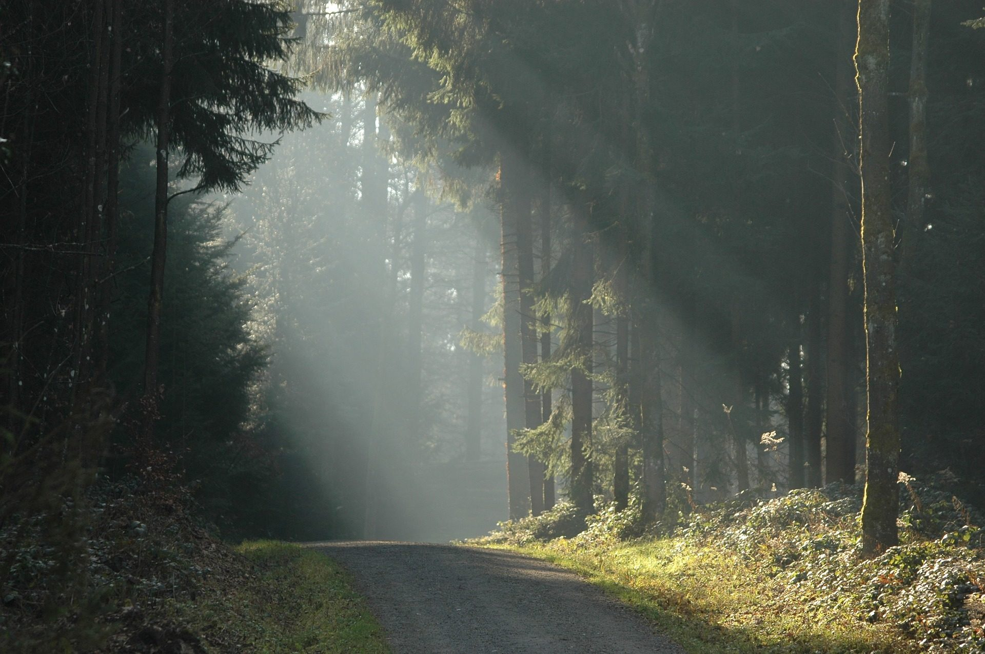 лес, Дорога, деревья, Конечно, свет, лучи - Обои HD - Профессор falken.com