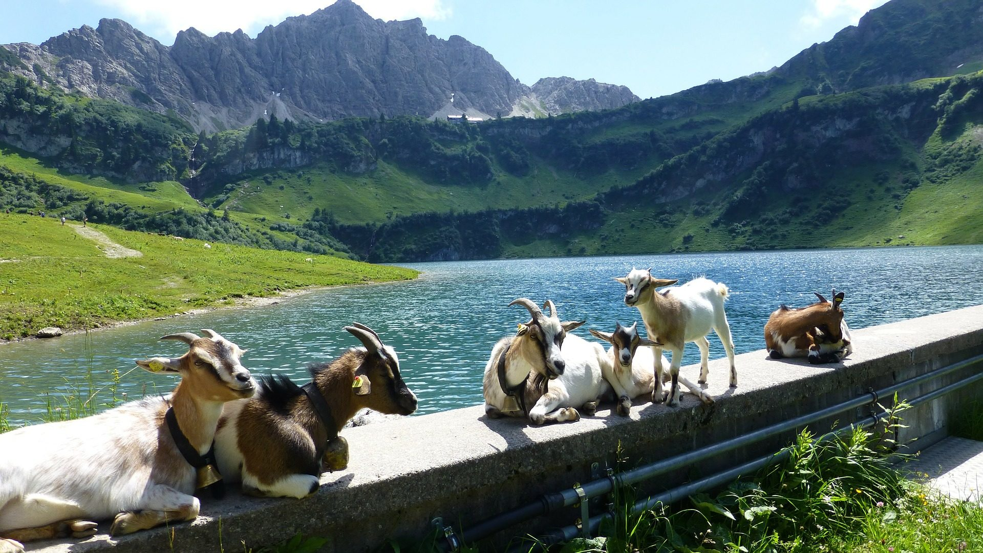chèvres, les petits enfants, montagnes, Vallée de, Lake, Rivière, Tirol - Fonds d'écran HD - Professor-falken.com