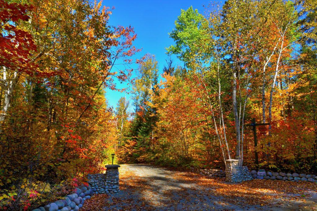 Δρόμου, δέντρα, Είσοδος, φύλλα, φθινόπωρο, 1703261309