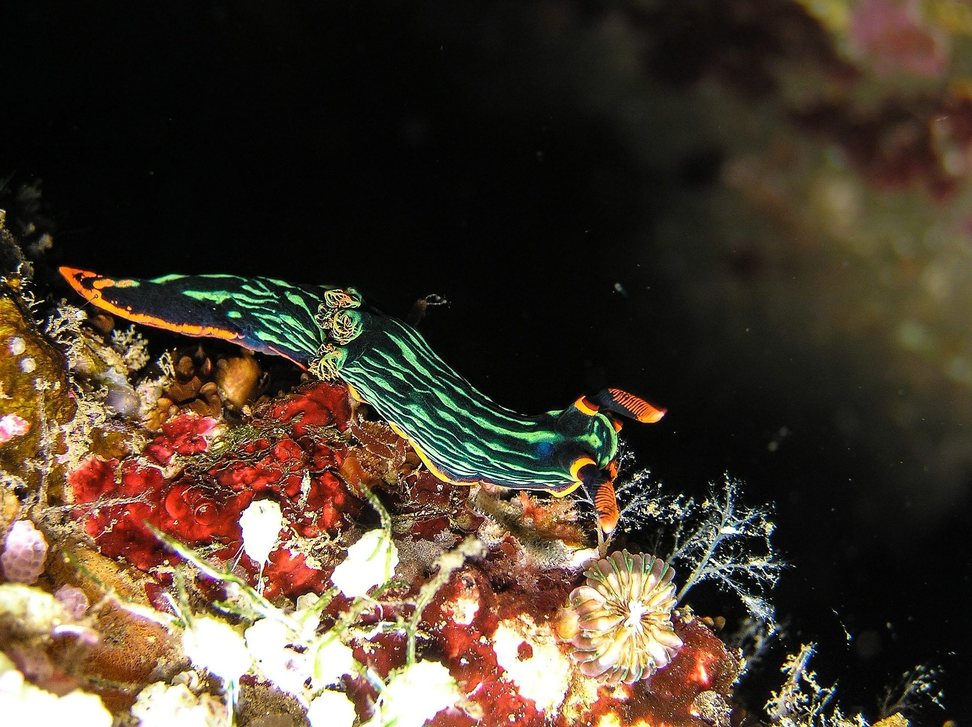 الحلزون, البحرية, تحت الماء, البحر, المحيط, الحيوانات - خلفيات عالية الدقة - أستاذ falken.com