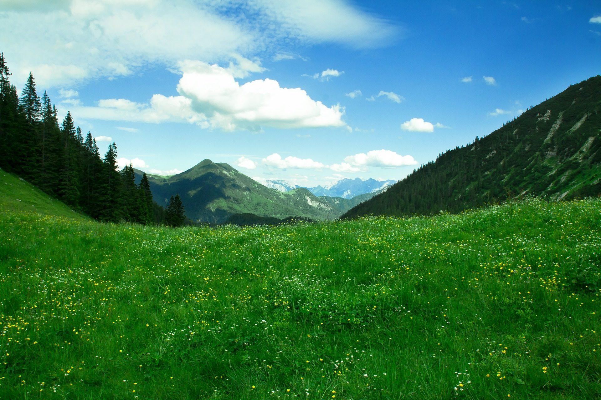 Montañas, PRADO, pradera, fiori, erba, alberi, Panorámica - Sfondi HD - Professor-falken.com