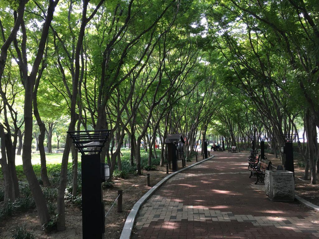 公園, 木, 道路, タイル, daegu, 1703280837