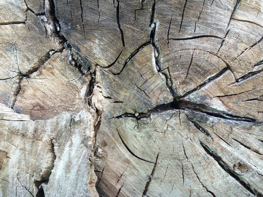 tronc, veines, bois, anneaux, Age, 1703052309