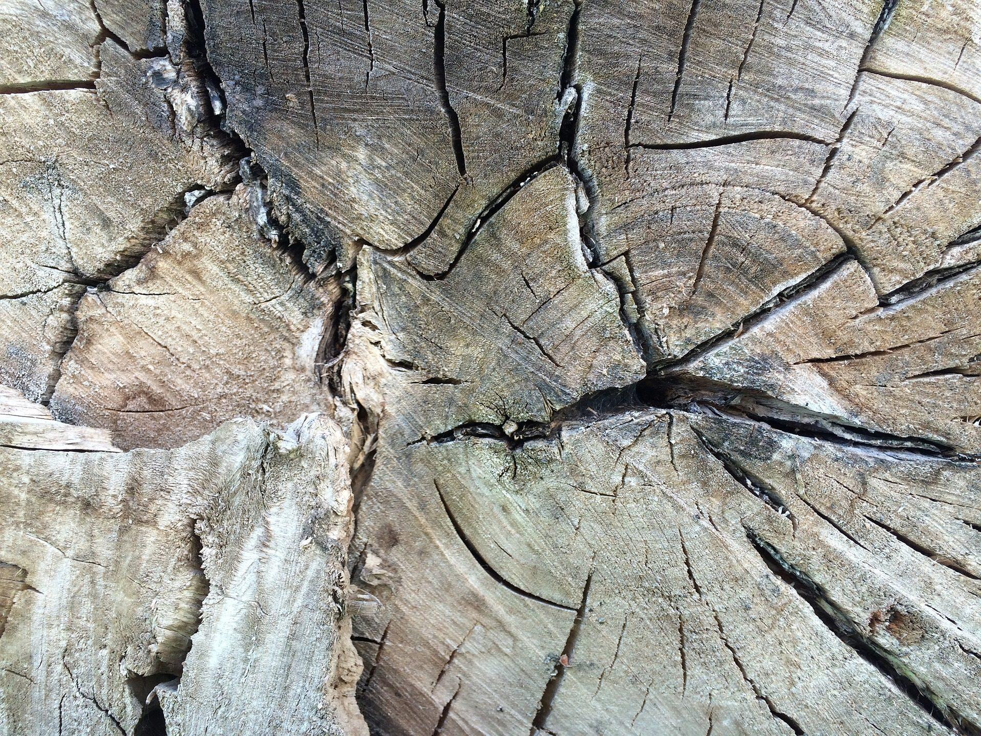 Fondo de pantalla de tronco vetas madera anillos edad for La veta de la madera