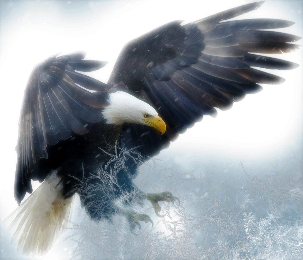 Eagle, Ave, prédateur, Majesté, griffes, 1704260834