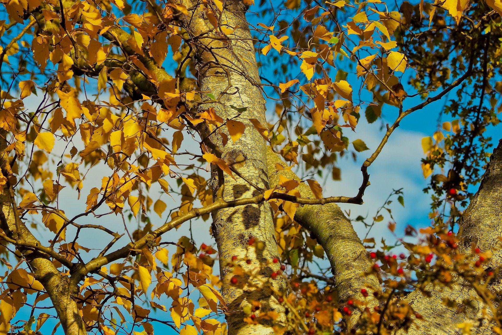 árbol, ramas, hojas, secas, otoño, caduco - Fondos de Pantalla HD - professor-falken.com