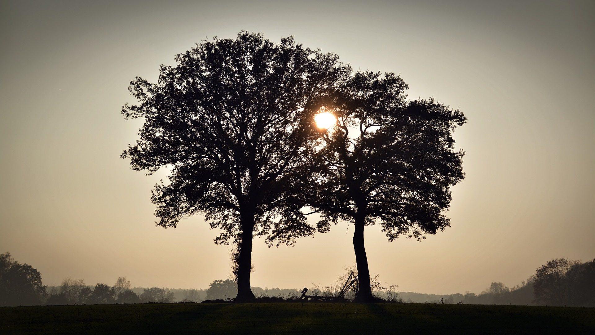 árvores, silhuetas, Sol, PRADO, campo, Ramos, figuras - Papéis de parede HD - Professor-falken.com