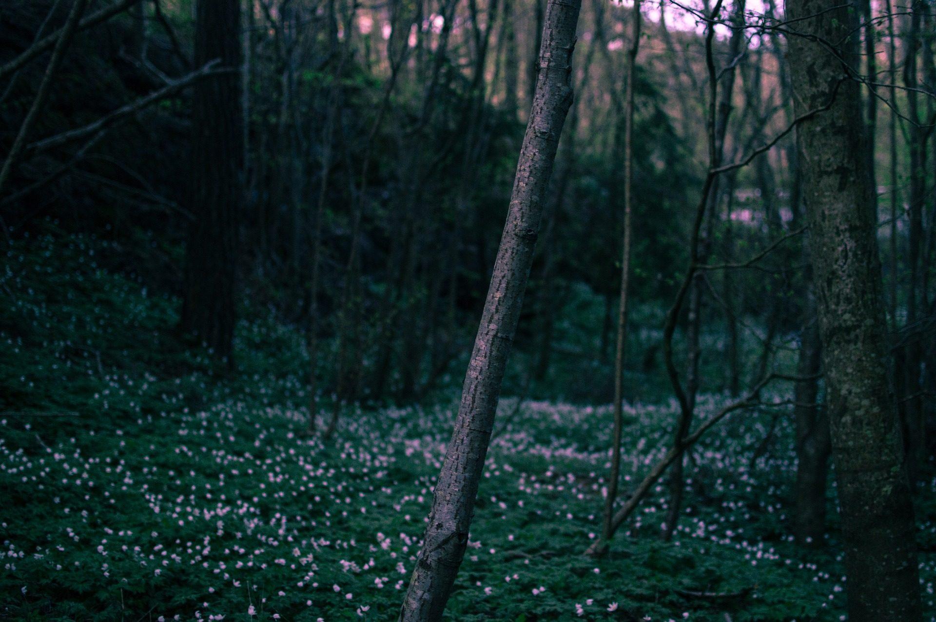 δάσος, δέντρα, λουλούδια, φύλλωμα, Άλμπα, Αυγή, γρασίδι - Wallpapers HD - Professor-falken.com