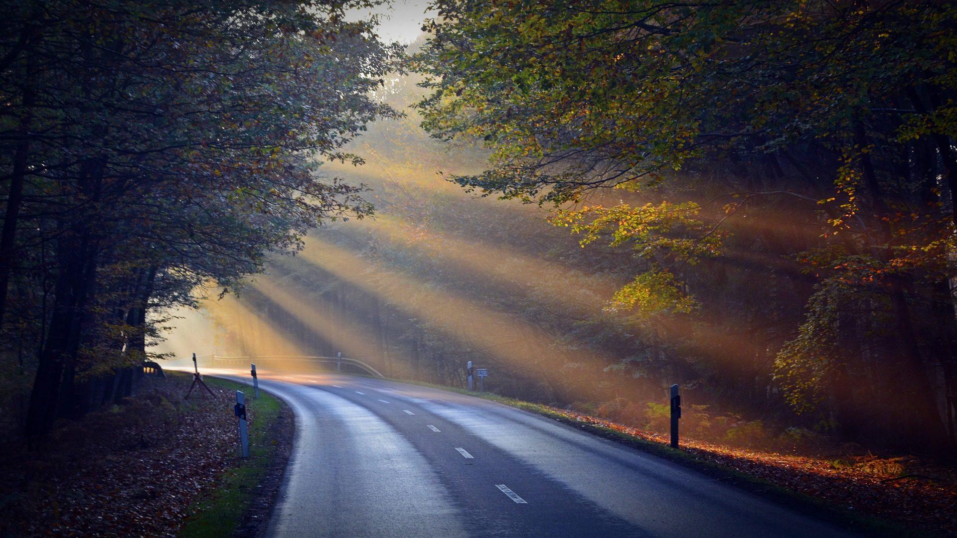 الطريق, الأسفلت, الغابات, أشعة, الشمس, هالات, الضوء - خلفيات عالية الدقة - أستاذ falken.com