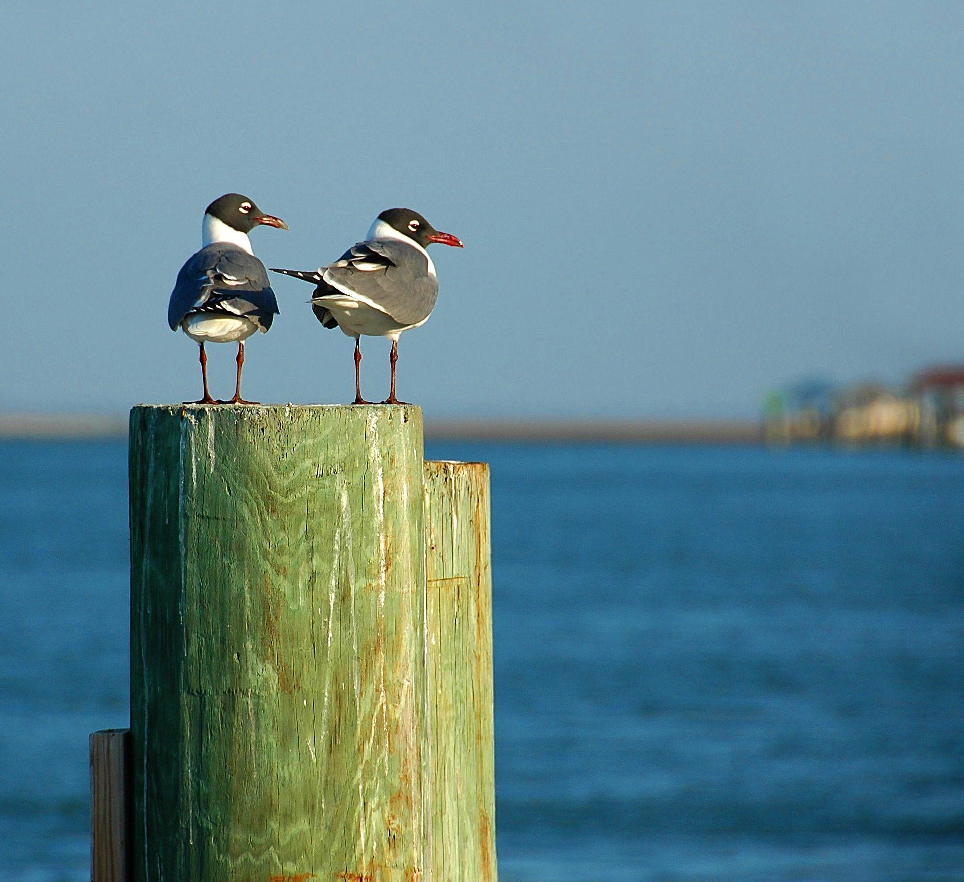 gabbiani, coppia, porta, Spiaggia, legno - Sfondi HD - Professor-falken.com