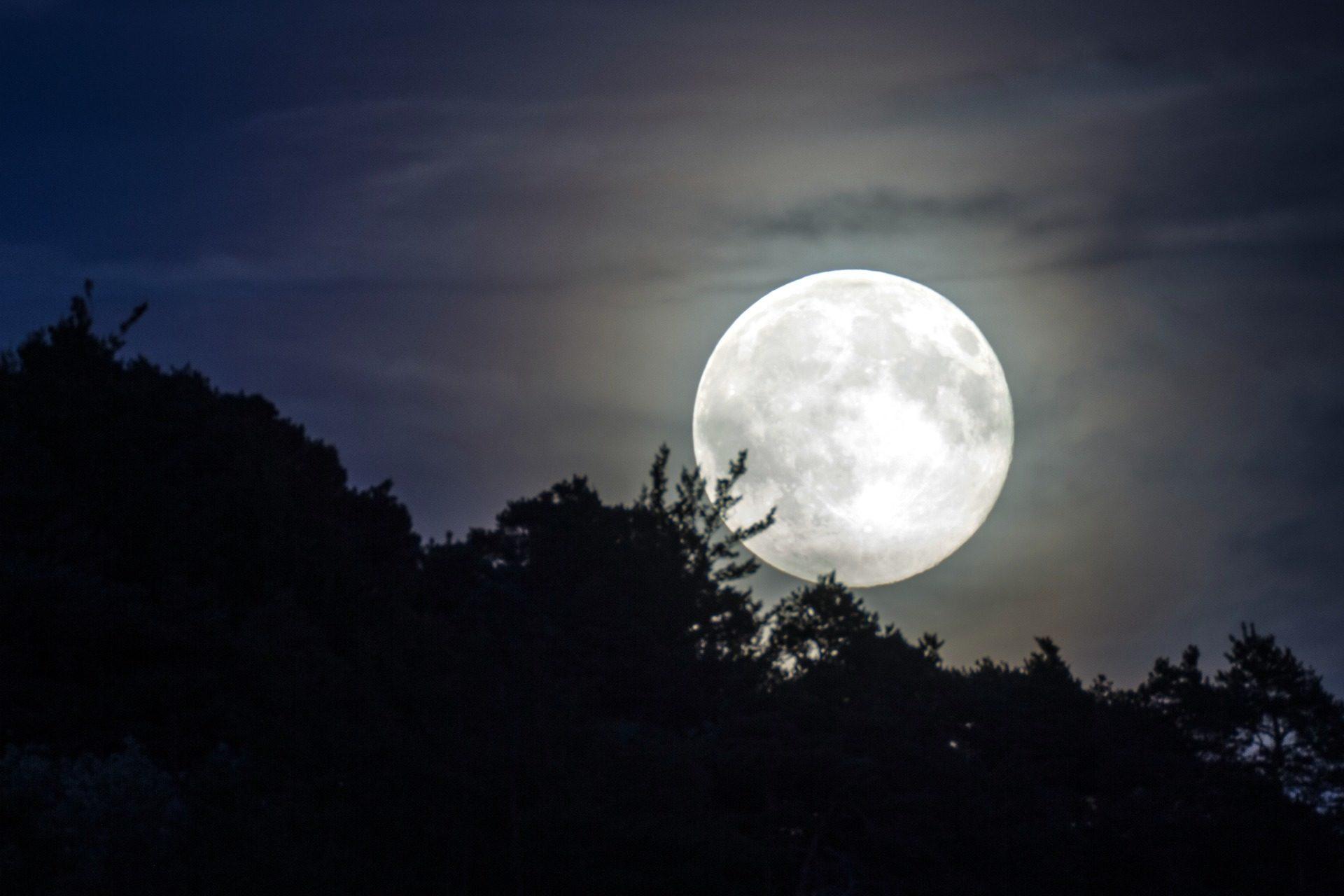Lua, completo, à noite, floresta, sombras, luz - Papéis de parede HD - Professor-falken.com