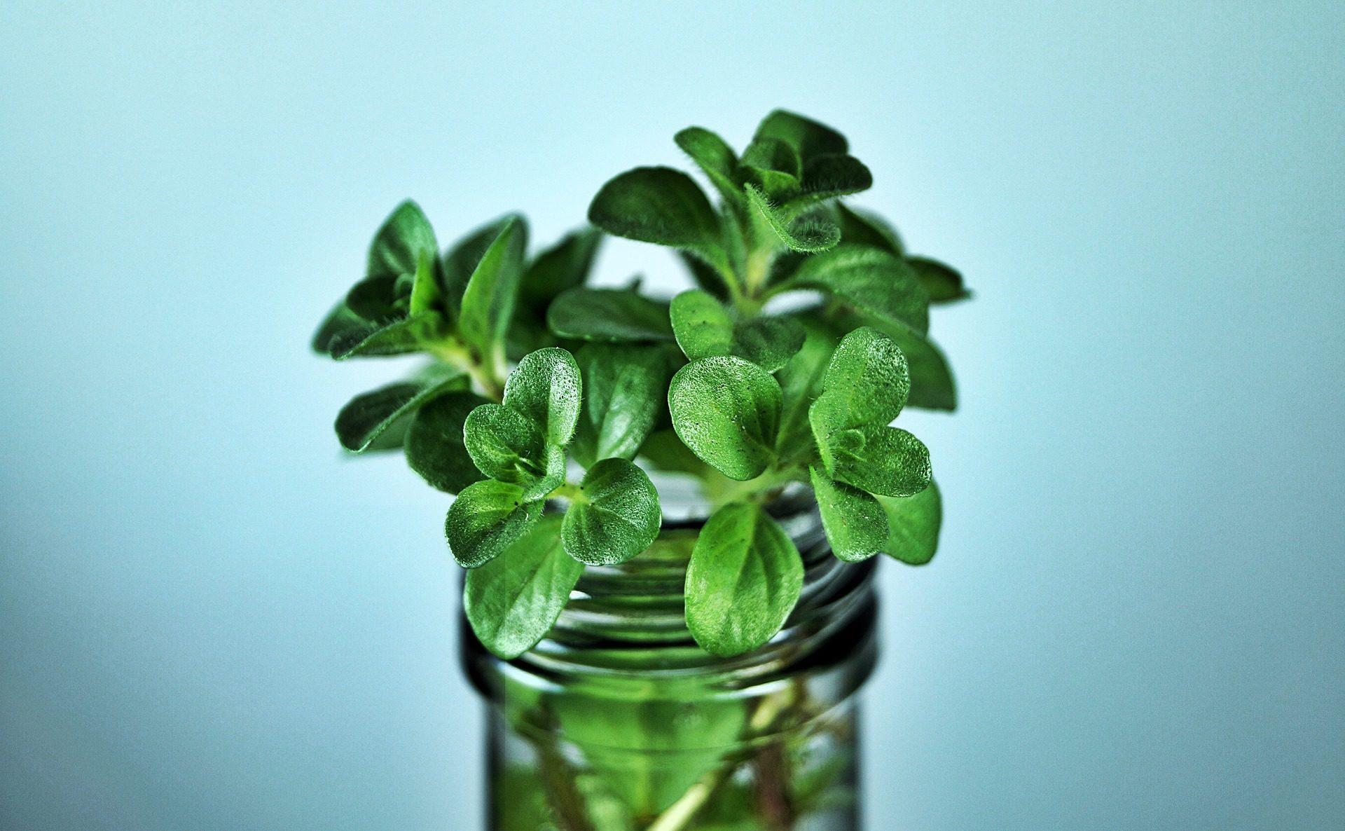 Menthe, rez de chaussée, aromatique, herbe, feuilles, Vert - Fonds d'écran HD - Professor-falken.com