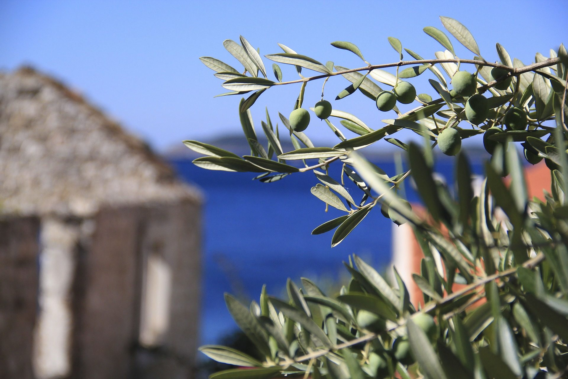 оливковое, оливки, дерево, филиалы, листья, принято, Средиземноморье - Обои HD - Профессор falken.com