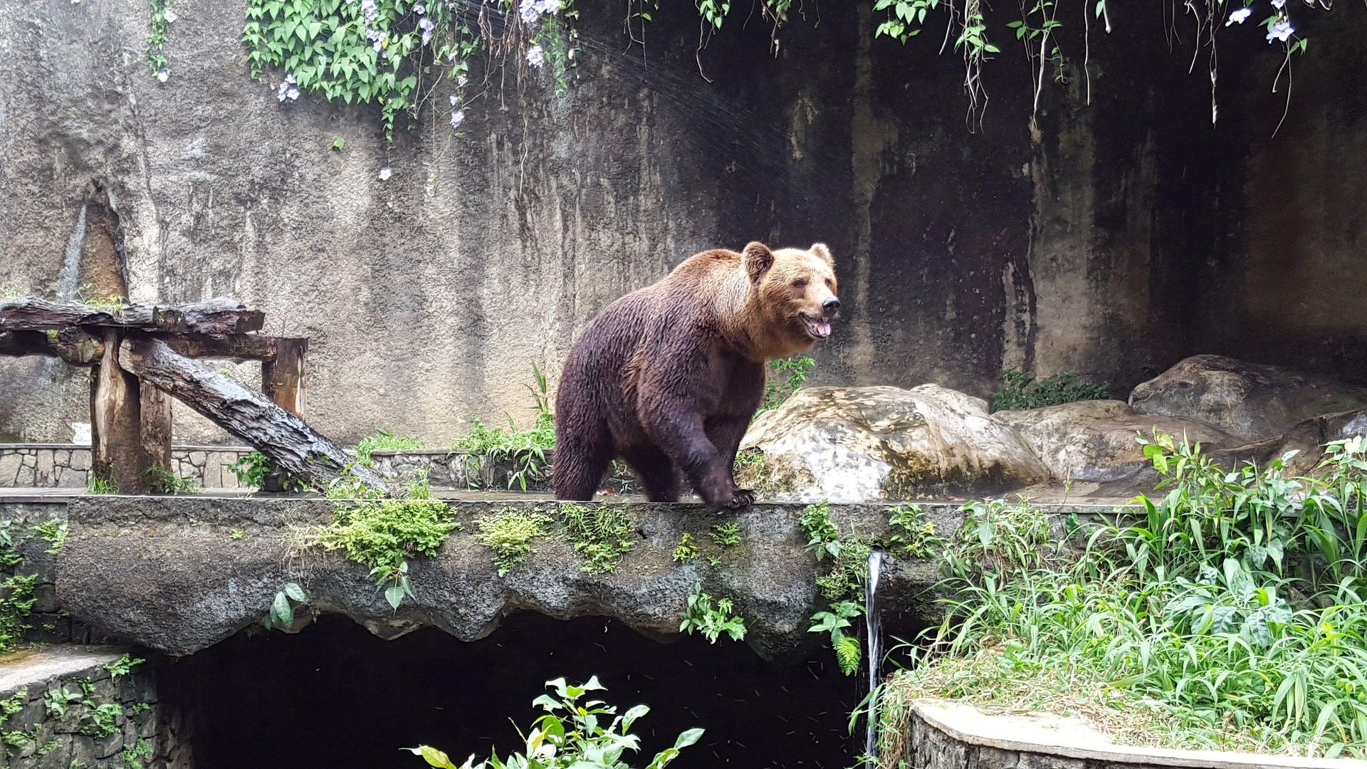 熊, 哺乳动物, 俘虏, 动物园, 洞穴 - 高清壁纸 - 教授-falken.com