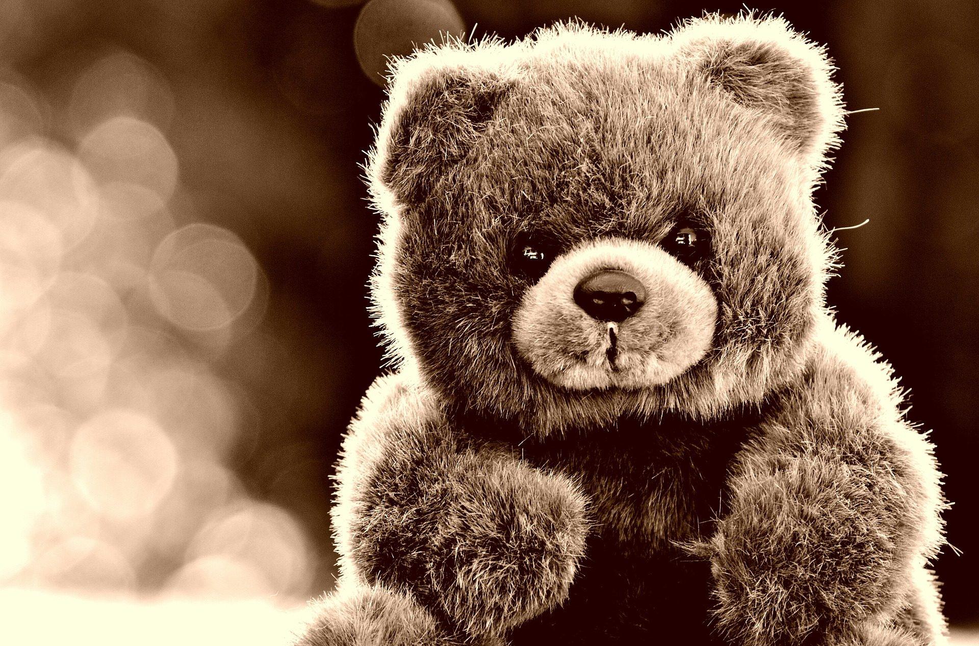 الدب, تيدي, لعبة, الشعر, بني داكن - خلفيات عالية الدقة - أستاذ falken.com