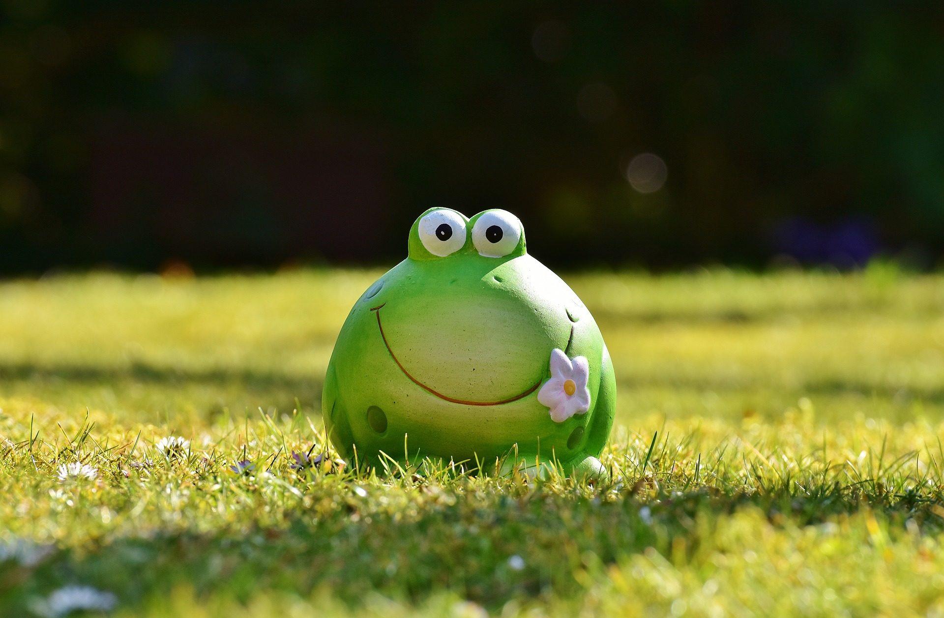 الضفدع, الرقم, حديقة, المرج, زهرة, ابتسامة - خلفيات عالية الدقة - أستاذ falken.com
