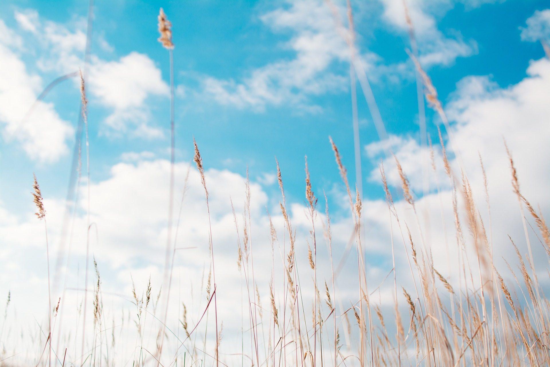 campo, vegetazione, picchi, Cielo, nuvole, rilassarsi - Sfondi HD - Professor-falken.com