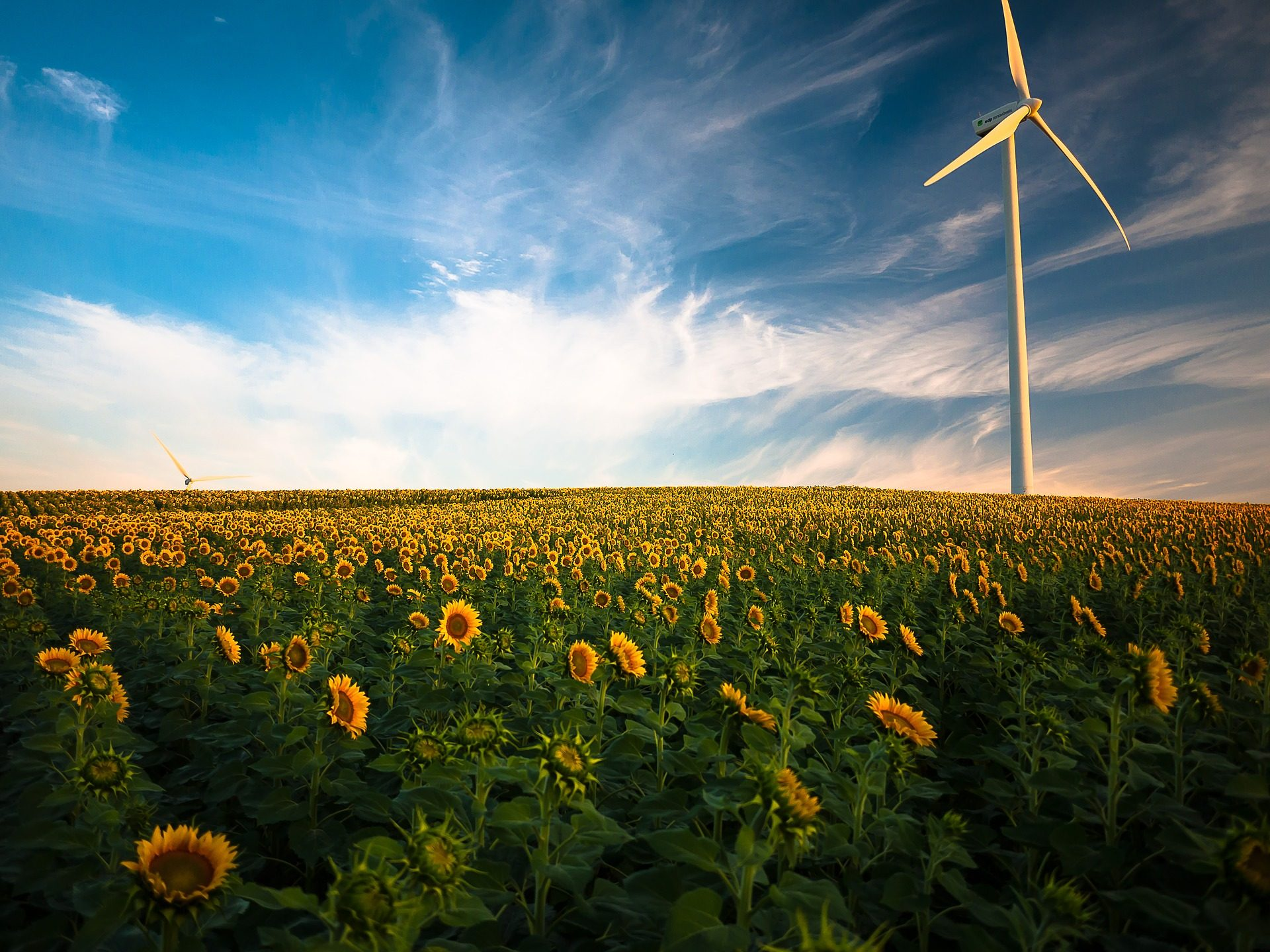 molino, campo, plantación, girasoles, cielo, nubes - Fondos de Pantalla HD - professor-falken.com