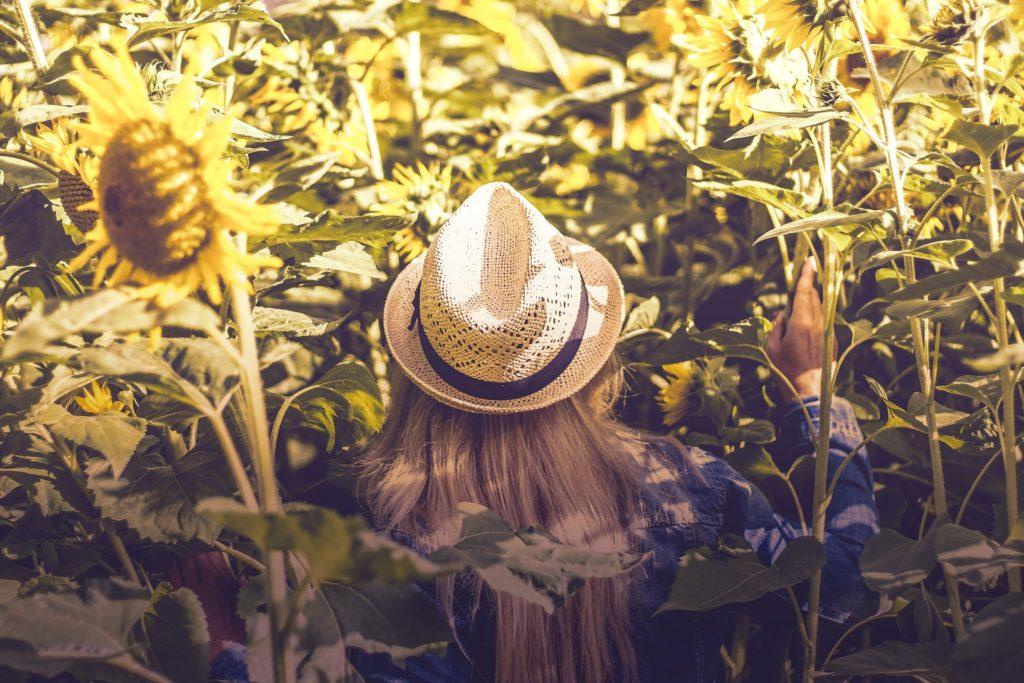 mujer, chica, campo, plantación, girasoles, sombrero, escondida, 1705271850