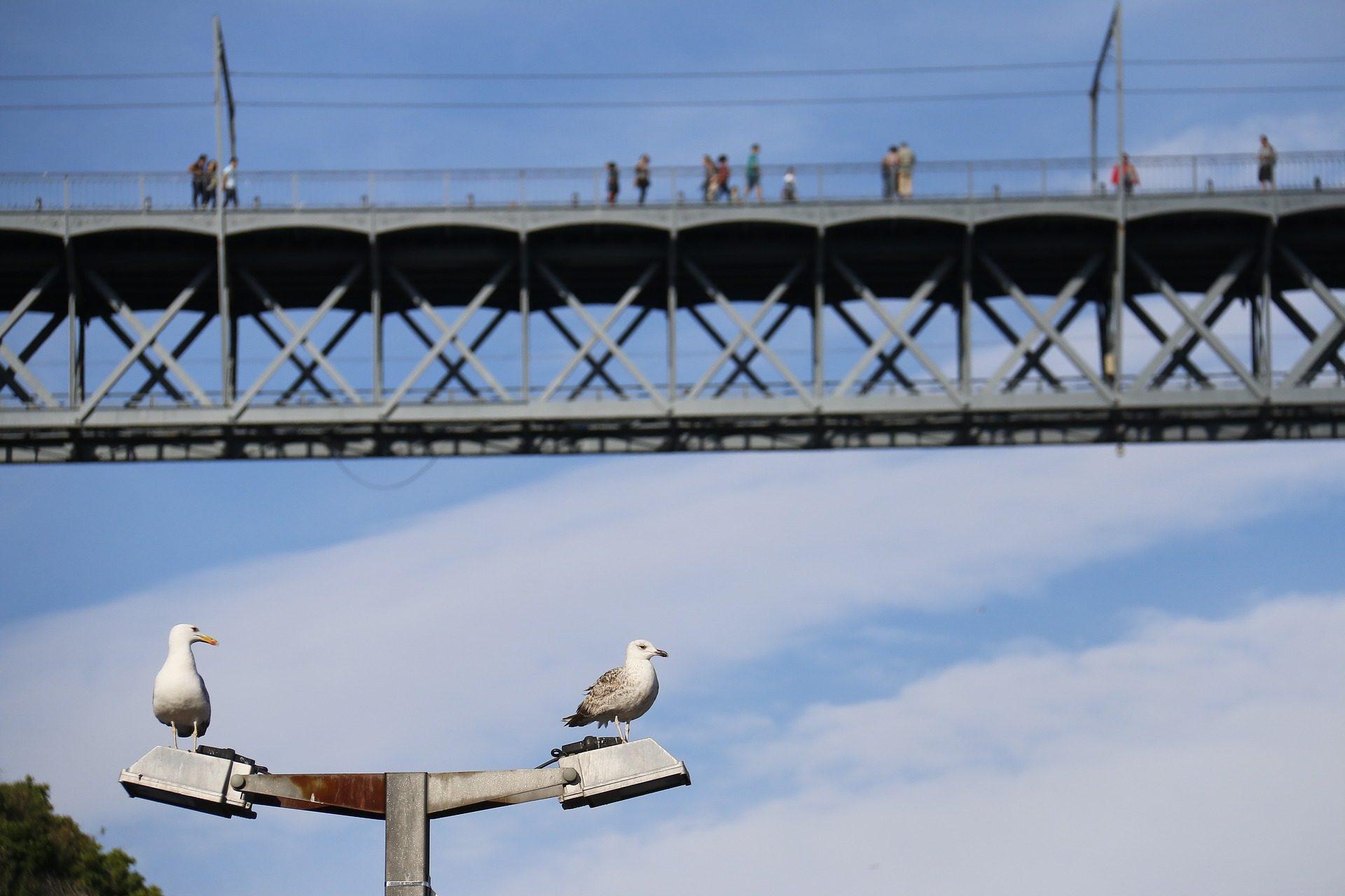 pont, gens, hauteurs, mouettes, Lampe de rue - Fonds d'écran HD - Professor-falken.com