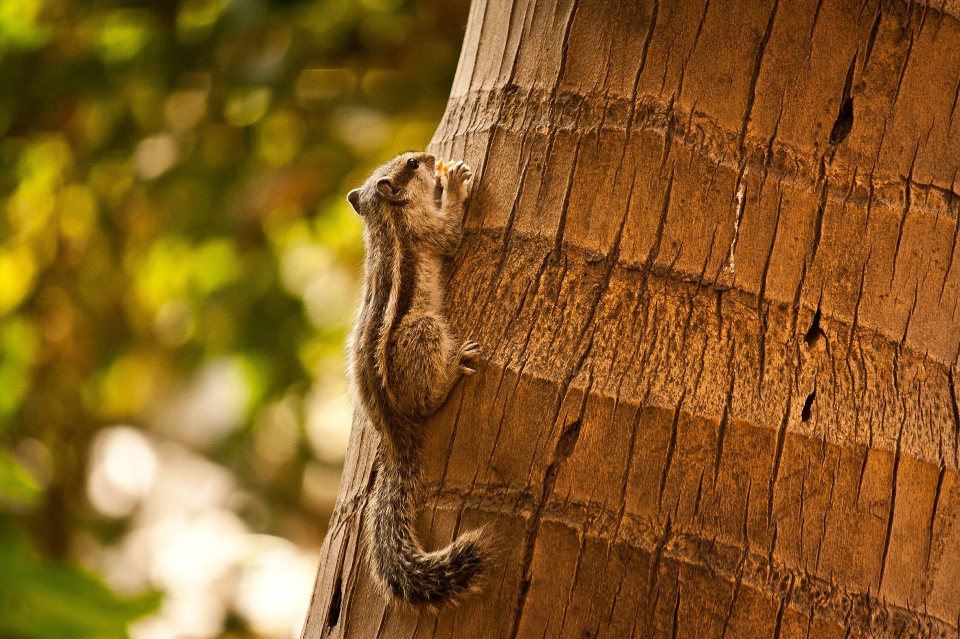 Écureuil, tronc, arbre, queue, rayé, Forest - Fonds d'écran HD - Professor-falken.com