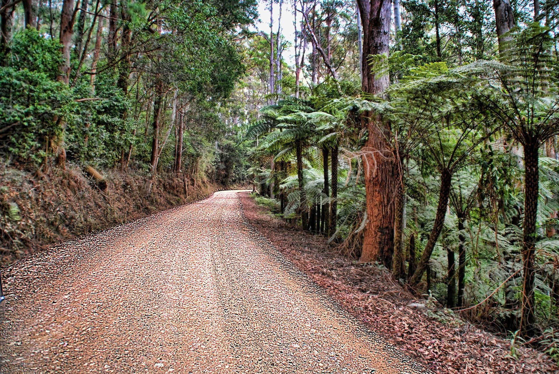 camino, Strada, Jungle, alberi, erbaccia, vegetazione - Sfondi HD - Professor-falken.com