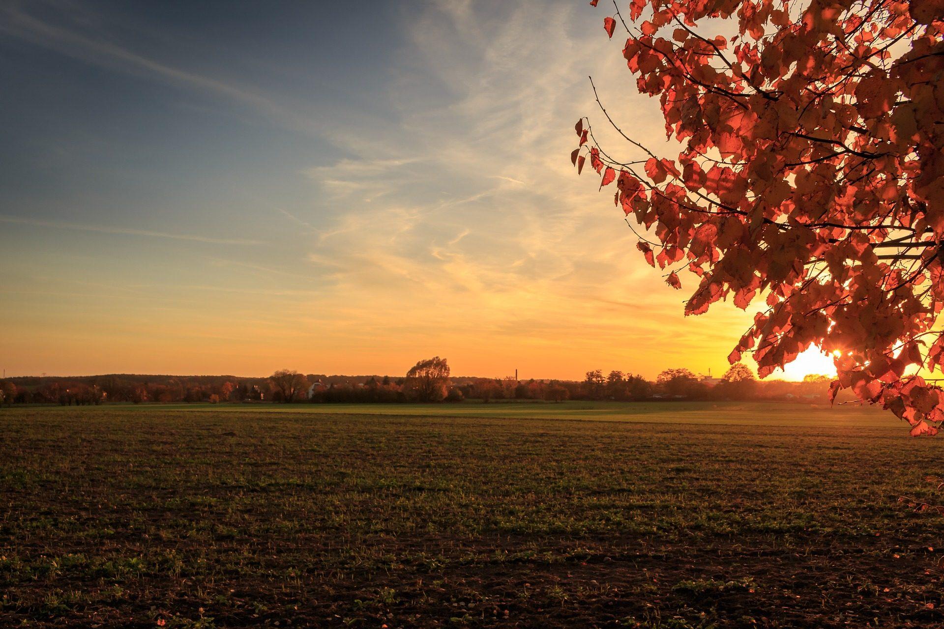 поле, ПРАДО, деревья, Закат, Солнце, свет, листья, Оранжевый - Обои HD - Профессор falken.com