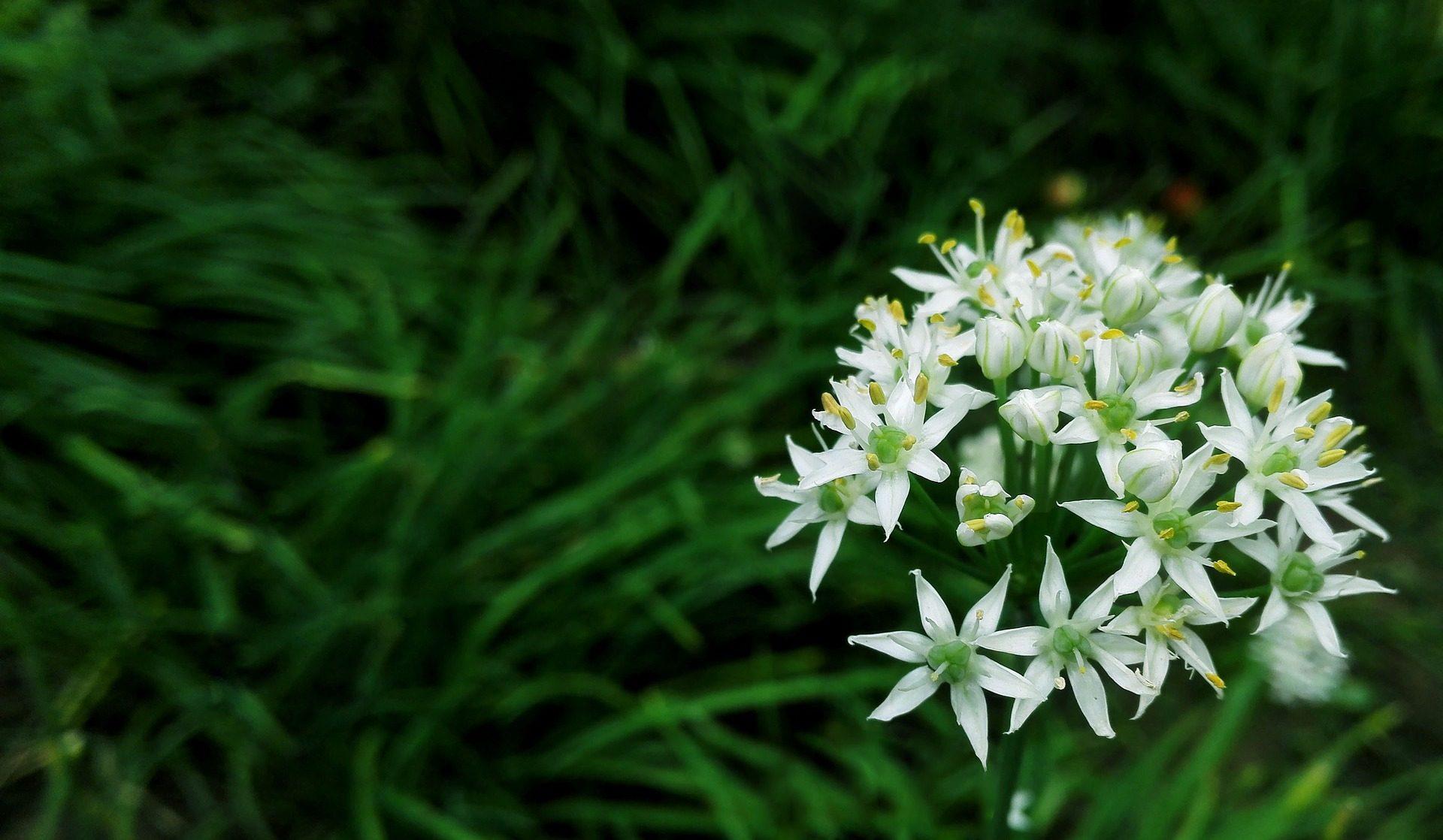 fleurs, plantes, pétales, étamines, Bloom, Blanc - Fonds d'écran HD - Professor-falken.com