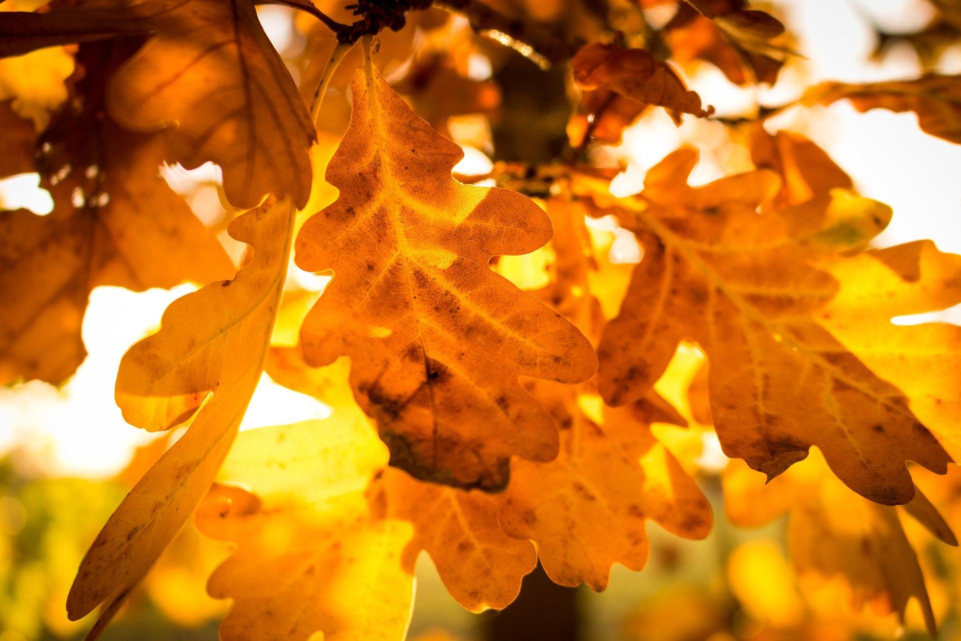 hojas, árbol, sol, luz, atardecer, anaranjado - Fondos de Pantalla HD - professor-falken.com