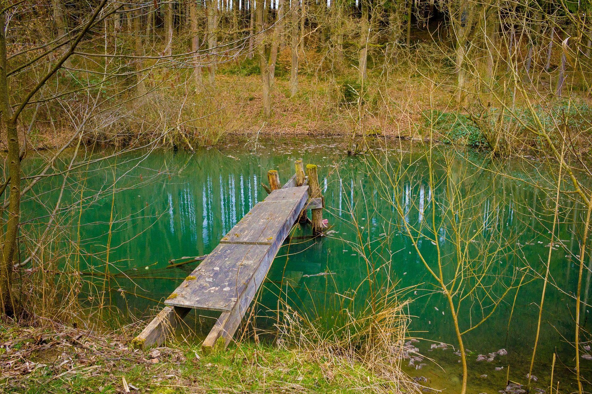 lago, charca, maderas, rotas, sucio, abandonado - Fondos de Pantalla HD - professor-falken.com