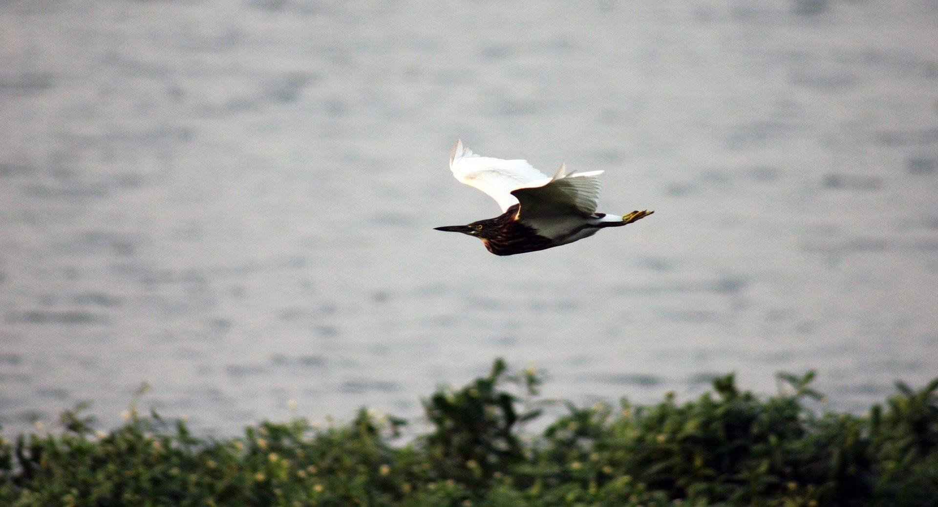 Πουλί, Λ., πτήση, ταχύτητα, ελευθερία - Wallpapers HD - Professor-falken.com