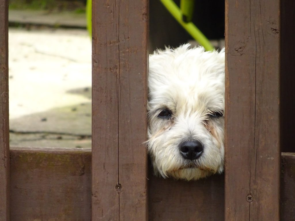 perro, mascota, jardín, valla, hocico, 1706201403
