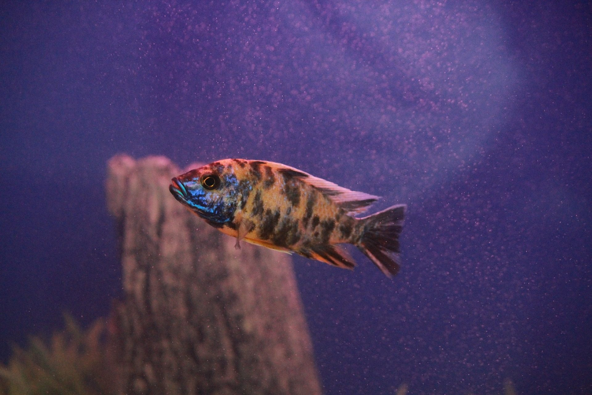 Fisch, bunte, Aquarium, Teich, Orange - Wallpaper HD - Prof.-falken.com