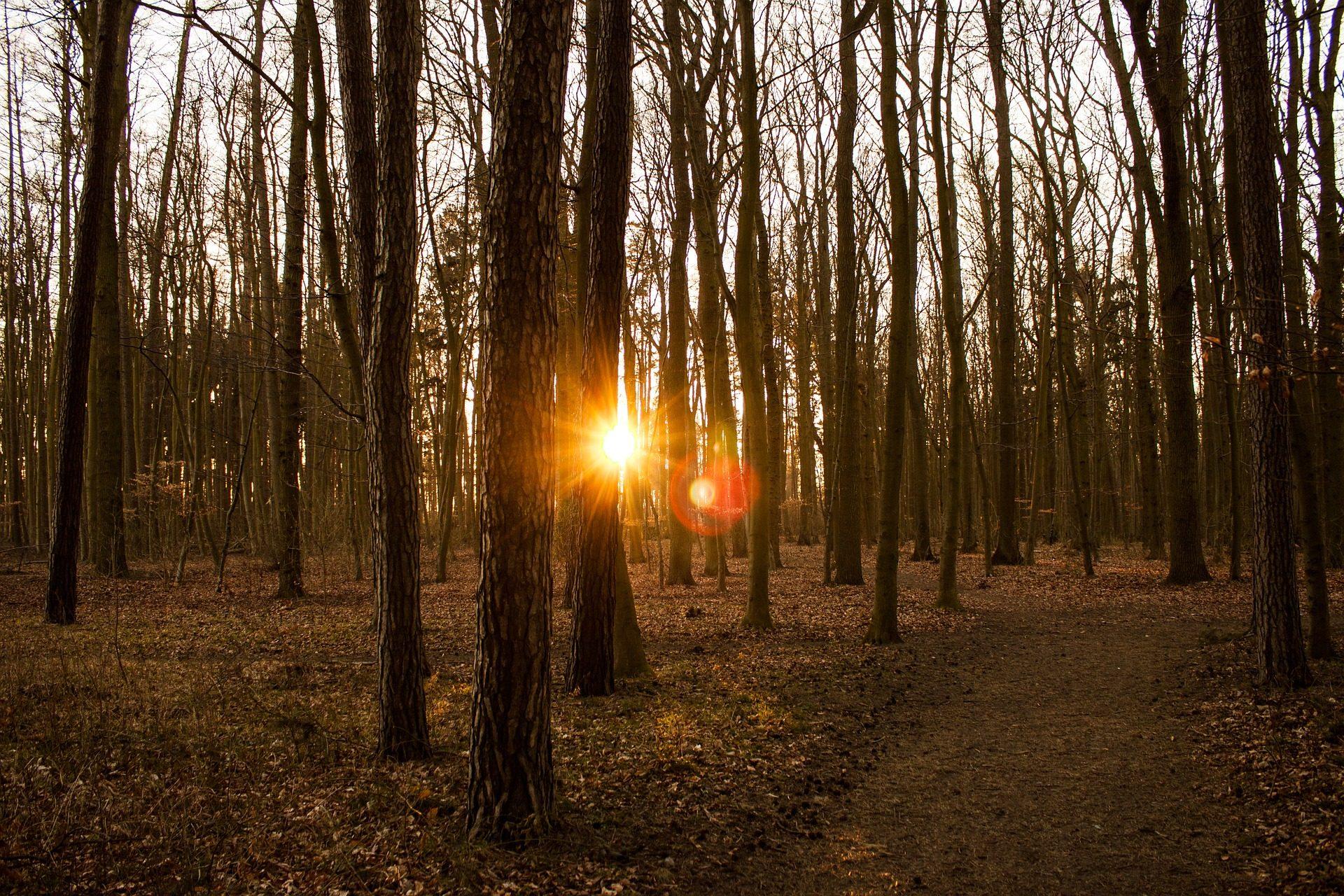 δάσος, πεδίο, δέντρα, Ηλιοβασίλεμα, υποκαταστήματα, Κυρ, ακτίνες, φωτοστέφανα - Wallpapers HD - Professor-falken.com