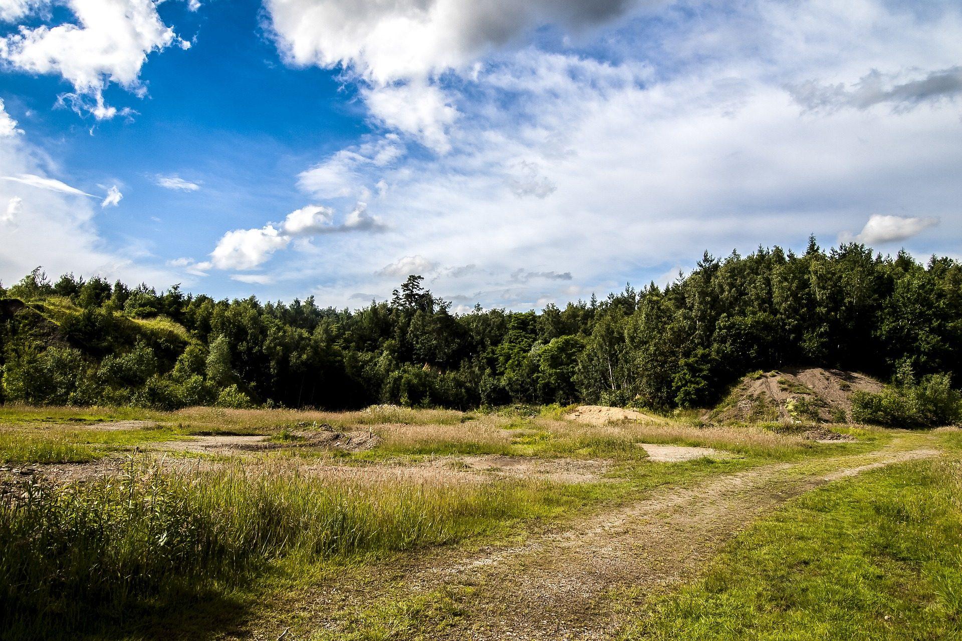 поле, ПРАДО, лес, деревья, газон, Небо, облака - Обои HD - Профессор falken.com