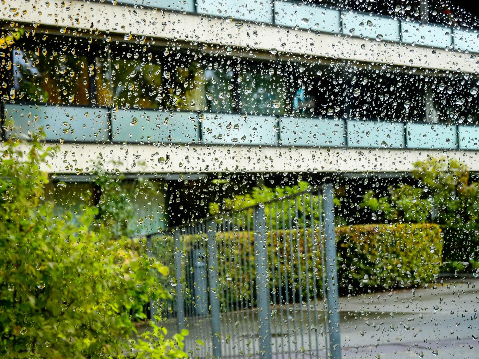 بناء, قطرات, المياه, المطر, شجرة - خلفيات عالية الدقة - أستاذ falken.com