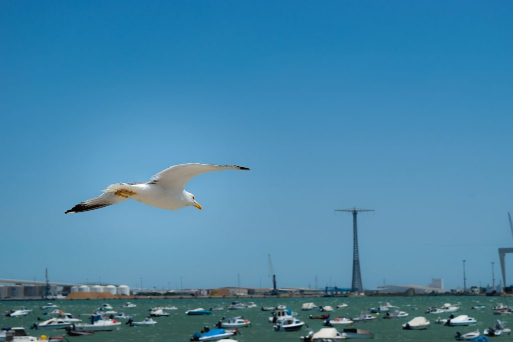gaviota, ave, vuelo, puerto, barcos, marítimo, 1707061610