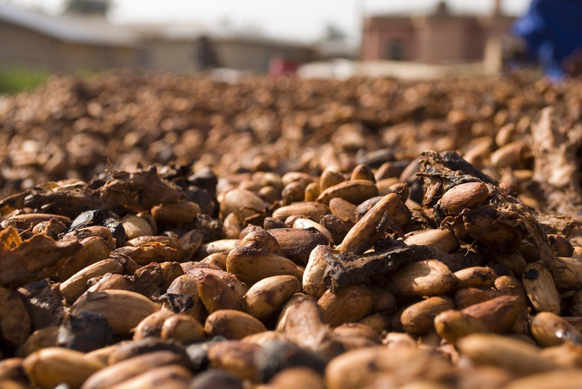 الحبوب, الكاكاو, الشوكولاته, يجمع, الفواكه - خلفيات عالية الدقة - أستاذ falken.com