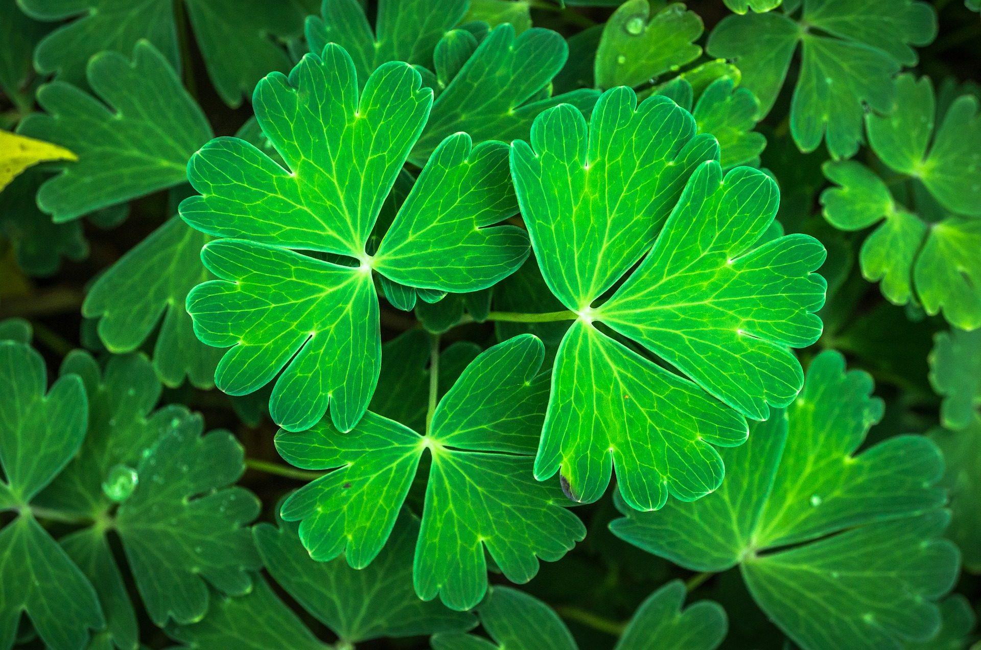 Blätter, Pflanzen, Garten, Stiele, üppige - Wallpaper HD - Prof.-falken.com