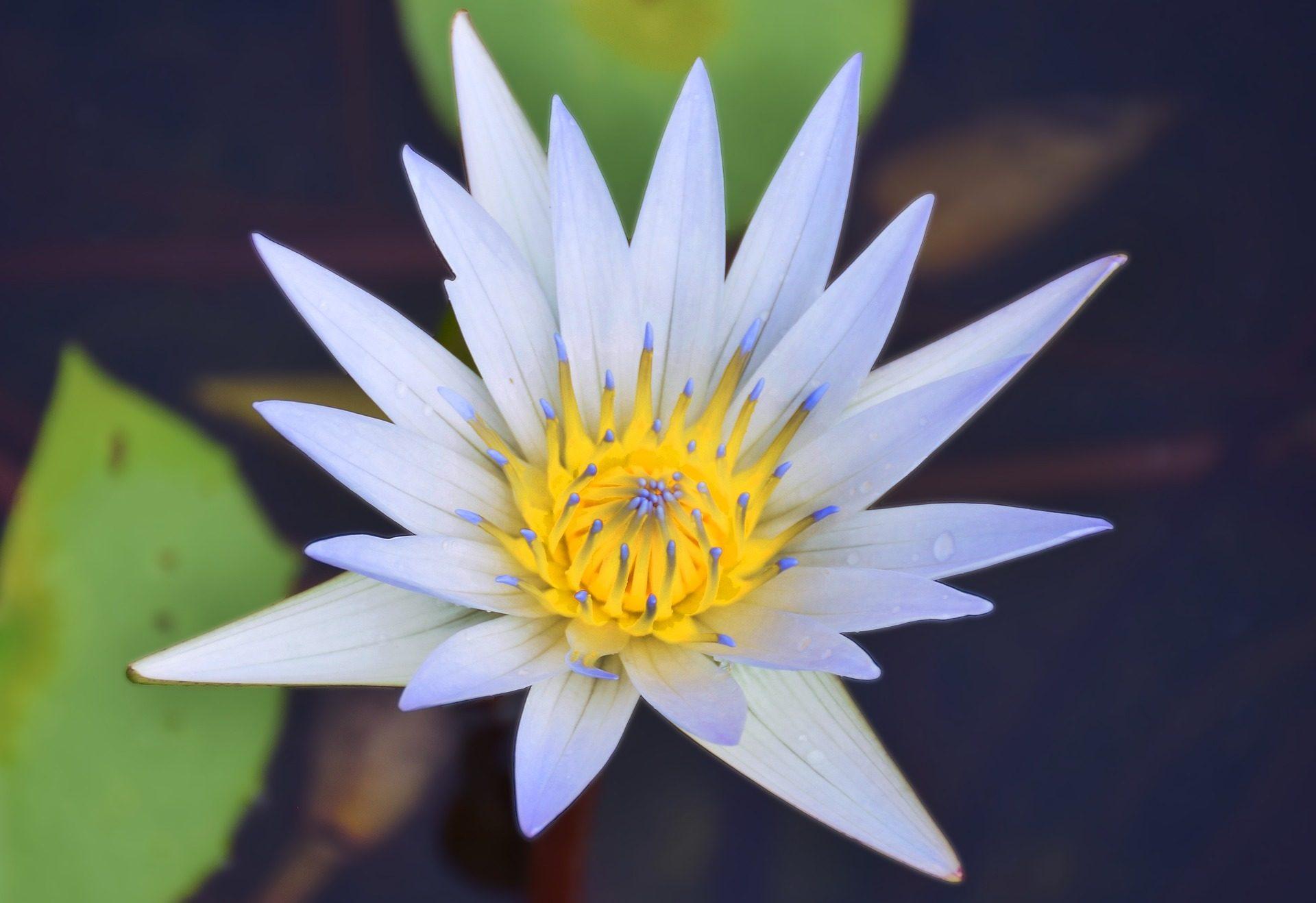 Lily, Wasser, Blütenblätter, scharfe, Blume, Tropfen - Wallpaper HD - Prof.-falken.com