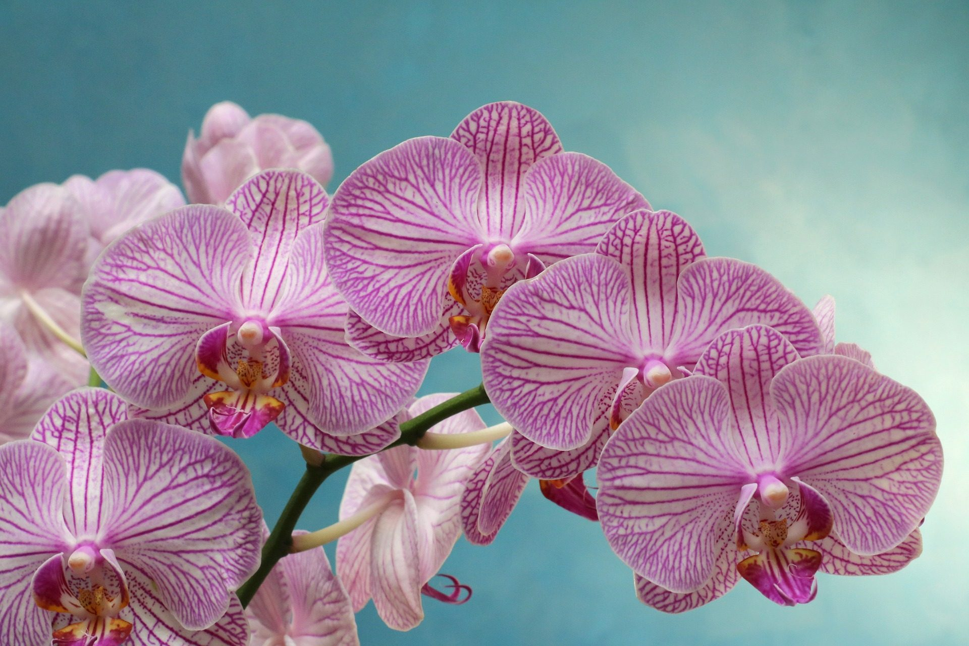 orchidées, fleurs, Bloom, pétales, Purple - Fonds d'écran HD - Professor-falken.com