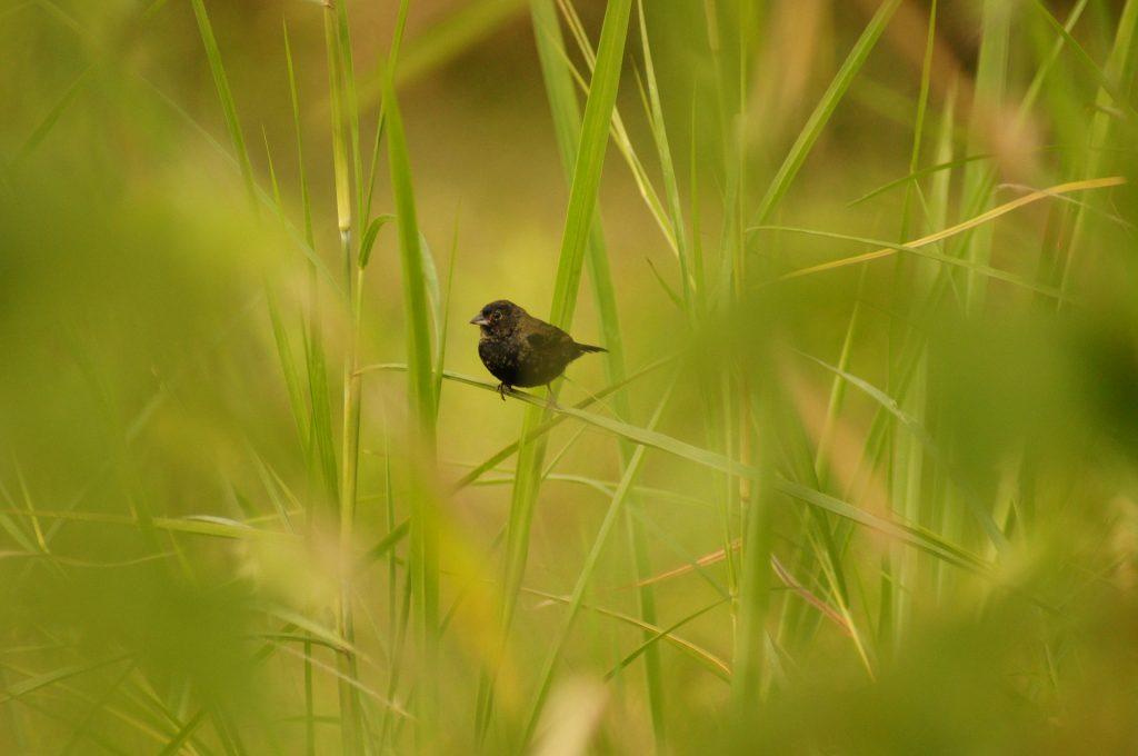 pájaro, ave, plantas, ramas, vegetación, 1707031833