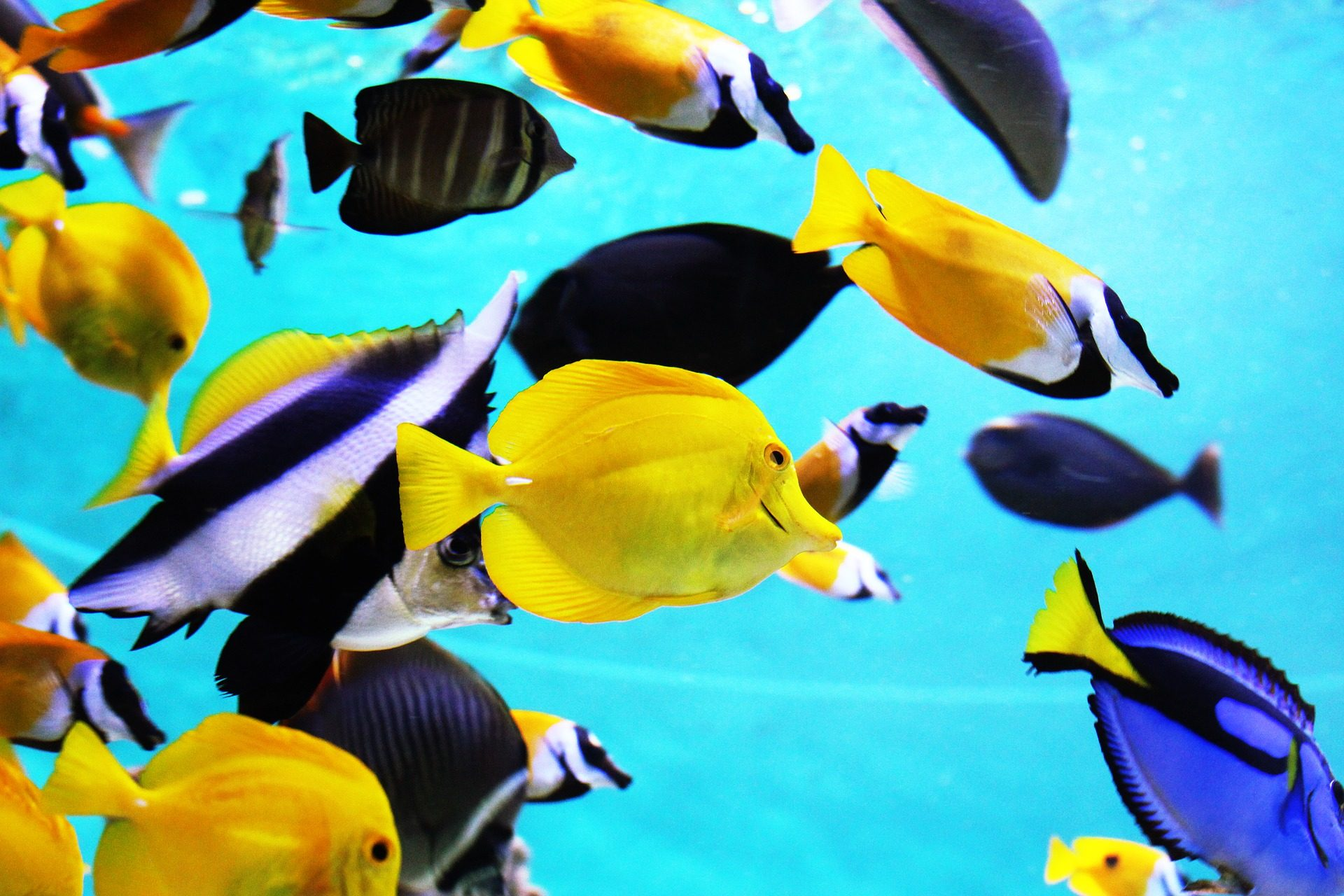 peces, tropicales, colorido, acuario, exóticos - Fondos de Pantalla HD - professor-falken.com