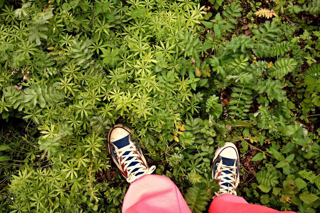 双脚, 道路, 植物, 花园, 鞋带, 1707021320