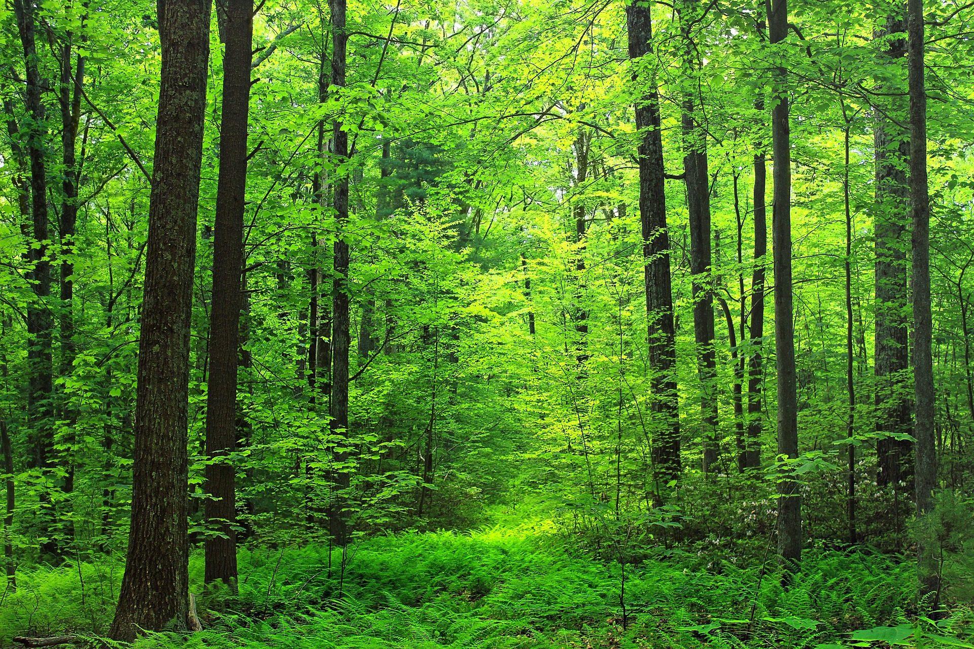 лес, деревья, пышные, растительность, растений - Обои HD - Профессор falken.com